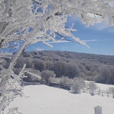 lacaunesous la neige
